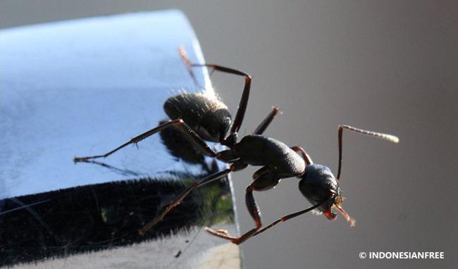 Semut selalu jatuh ke kanan setiap kali disemprot cairan anti hama