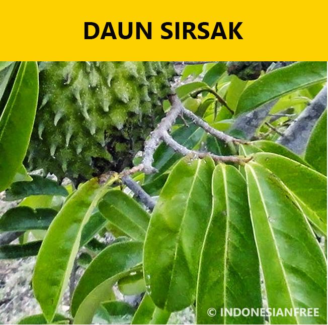 jenis sayuran untuk penderita asam urat daun sirsak