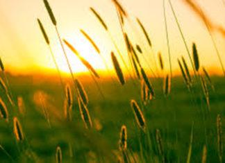 warna matahari di pagi hari