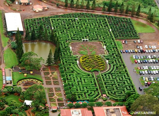 labirin terbesar di dunia