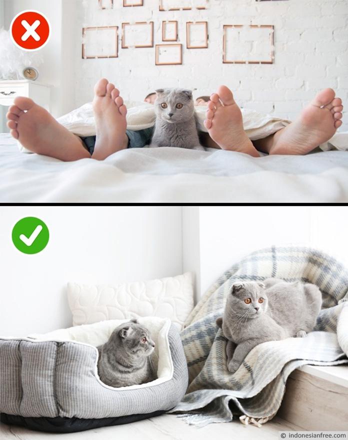 Jangan Berbagi Tempat Tidur dengan Hewan Peliharaan