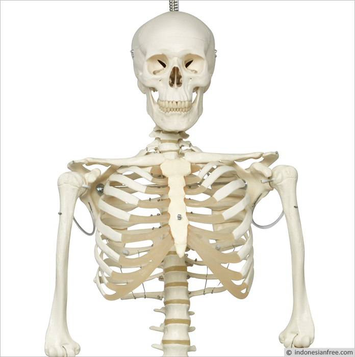 Memperkuat Tulang