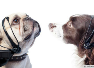 Penerjemah Bahasa Anjing ke Manusia